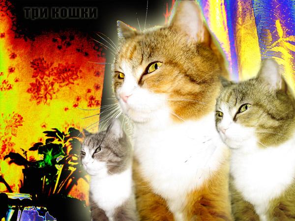 Три кошки