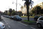 Италия-2010. Неаполь (Napoli). Пальмы